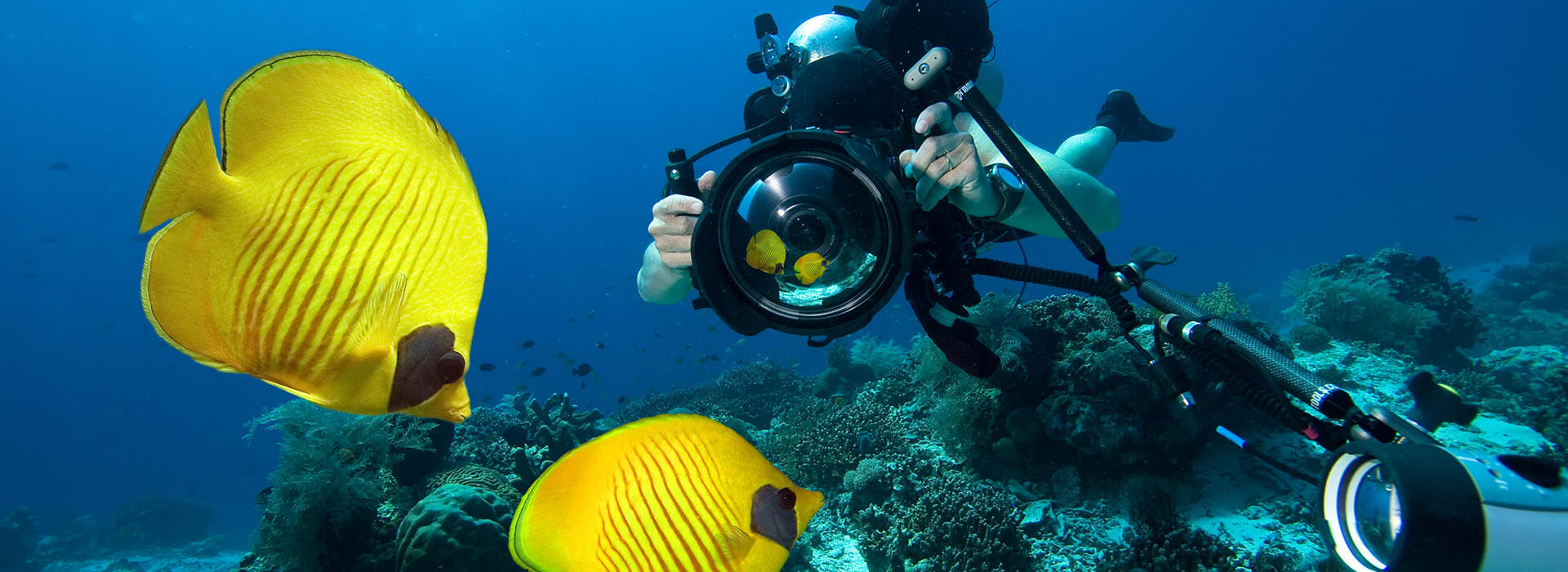 scuba diving yellow fish