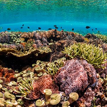 Coral under ocean