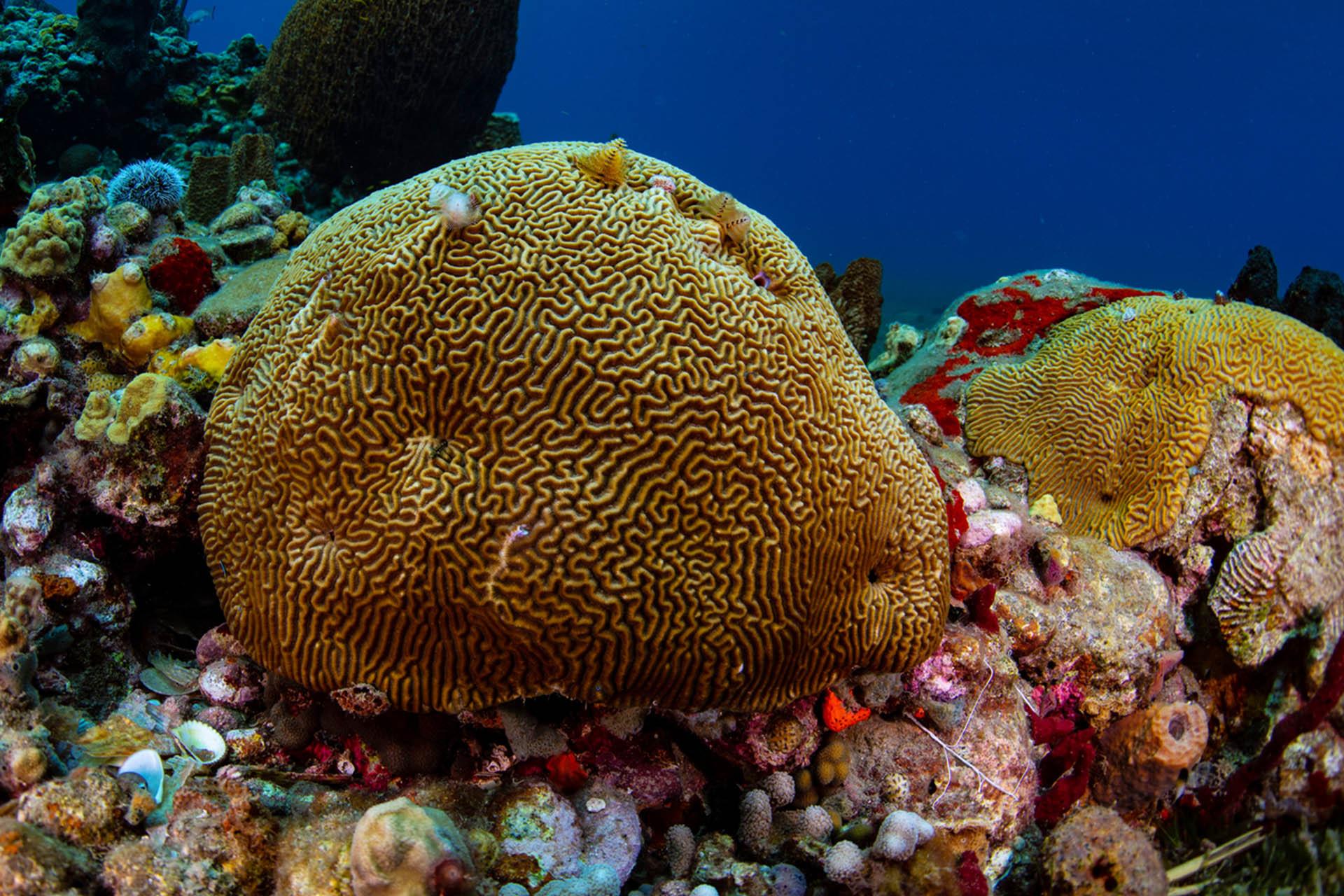 coral under the sea